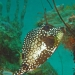 St Johns underwater
