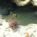 Australia Underwater Videos