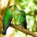 Costa Rica – Arenal & Monteverde